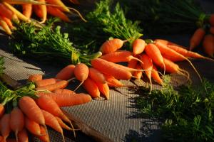 13-11 carrots